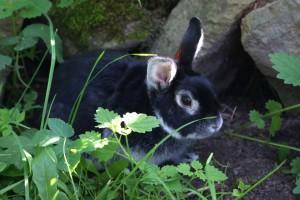Náš králík John
